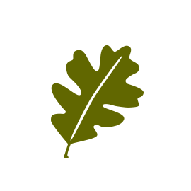 Leaf by PJ Souders from the Noun Project